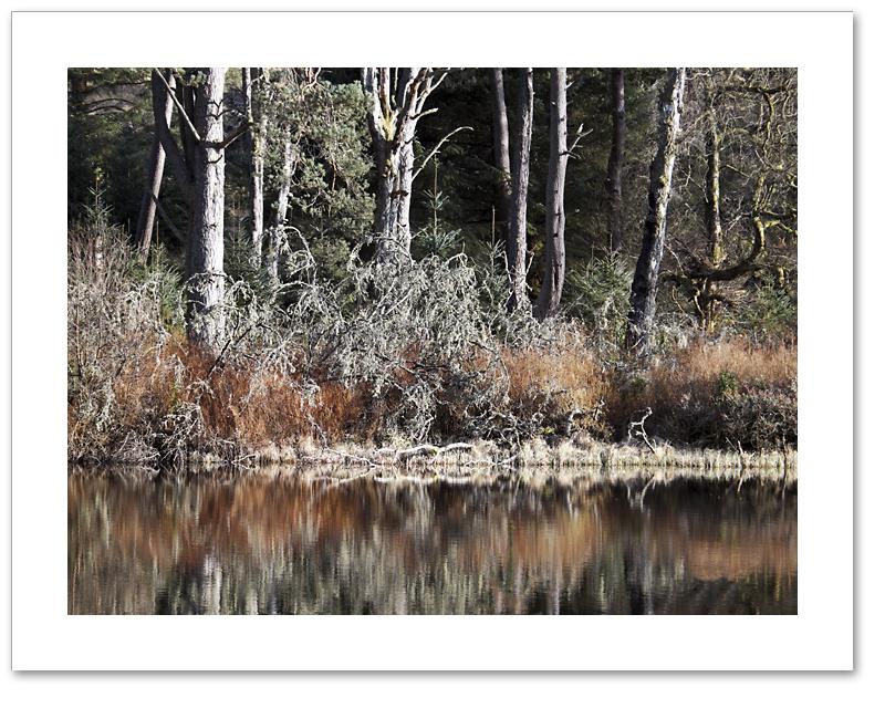 Jungle, Cally Loch, Atholl Woods, Perthshire