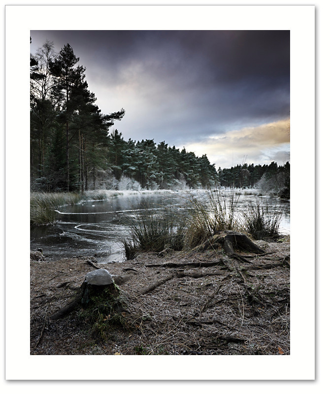 Stumped, Devilla Forest, Fife