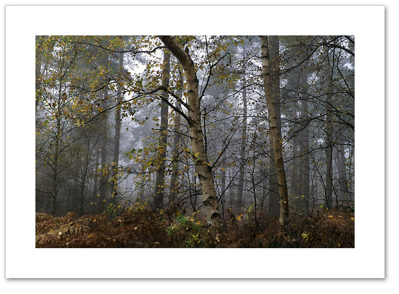 Speckled, Devilla Forest, Fife