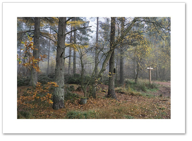 Choices, Devilla Forest, Fife