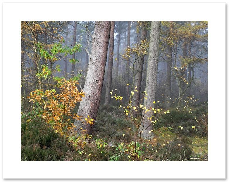 Bend, Devilla Forest, Fife