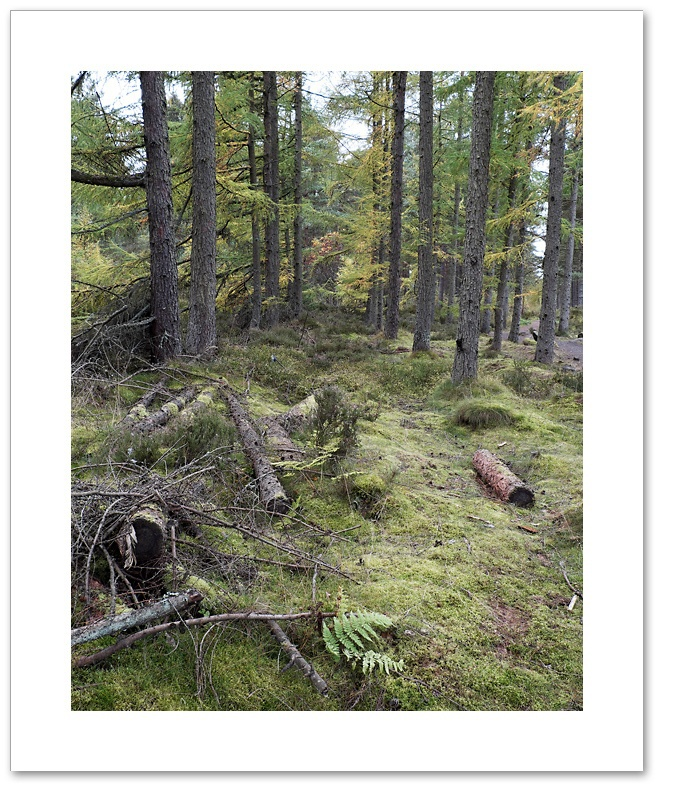 Within ll, Devilla Forest, Fife