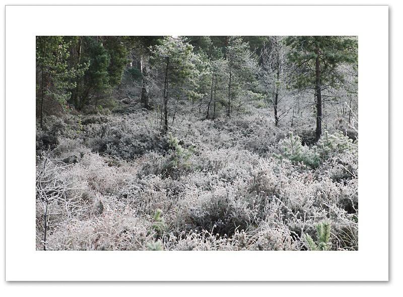Frost, Devilla Forest, Fife