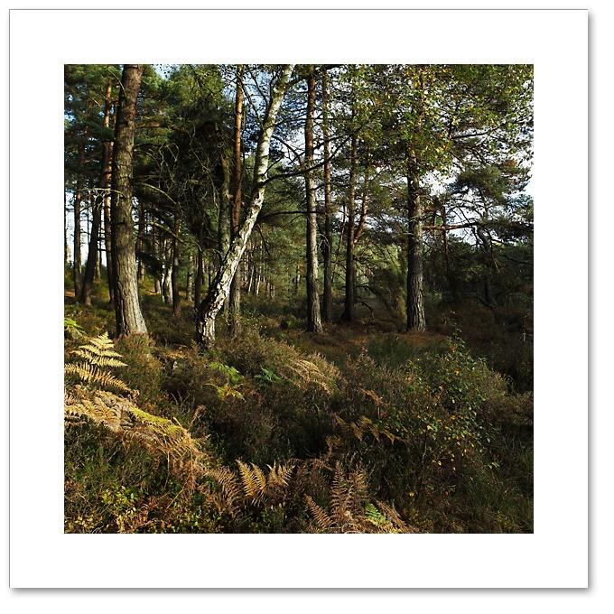 Shades of Autumn, Devilla Forest, Fife