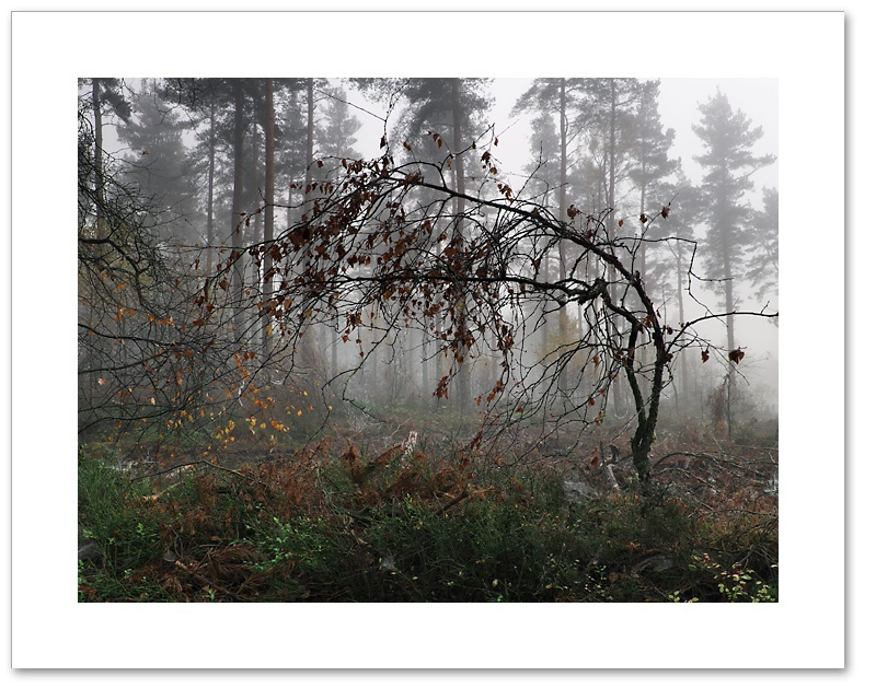 Withering Heights, Devilla Forest, Fife