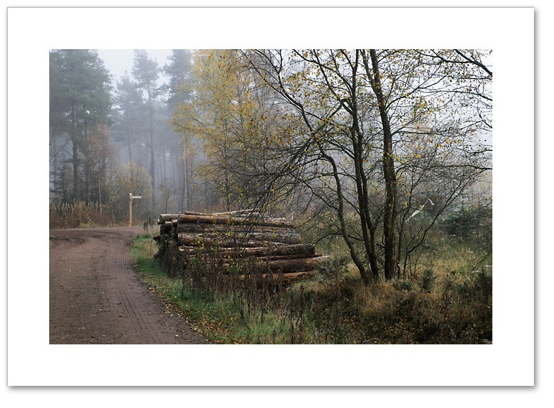 This Way, Devilla Forest, Fife