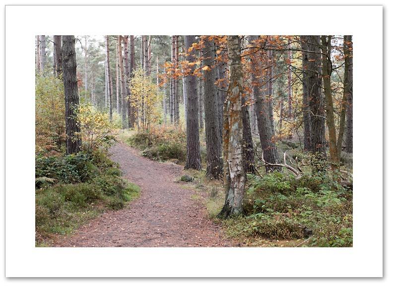 Path, Devilla Forest, Fife