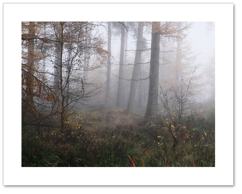 Four of a Kind, Devilla Forest, Fife