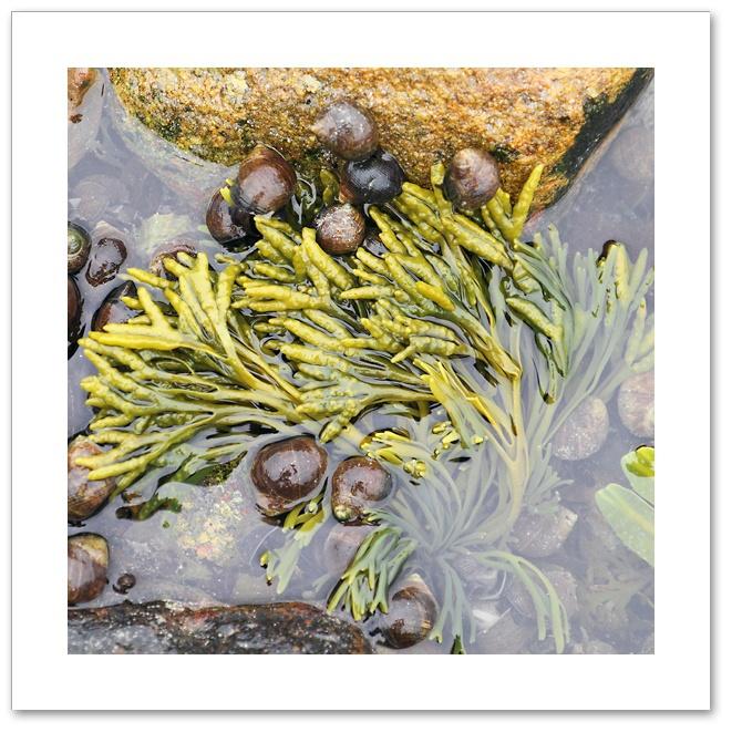 Seaweed VII