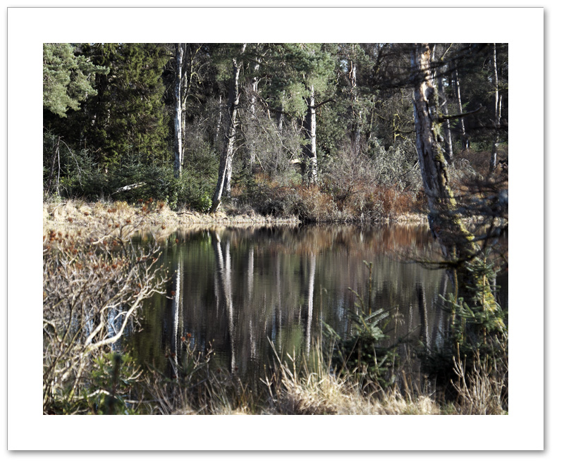 Swamp, cally Loch, Atholl Woods, Perthshire