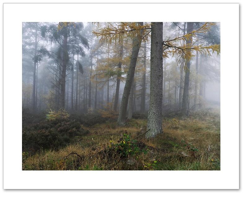 Edge, Devilla Forest, Fife