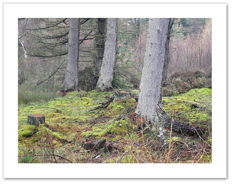And Then There Were Three, Devilla Forest, Fife