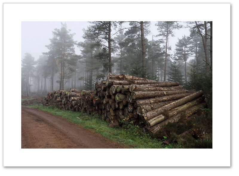 Operation Stack, Devilla Forest, Fife