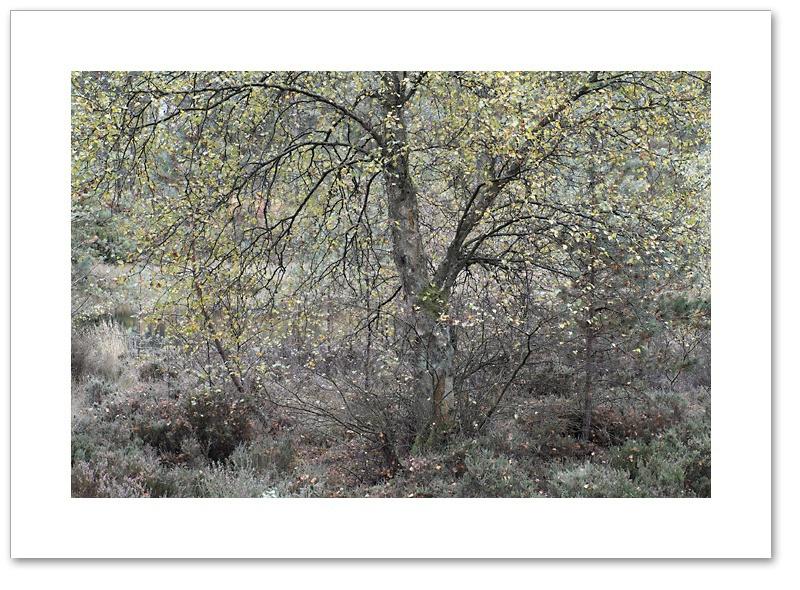 Flutter, Devilla Forest, Fife