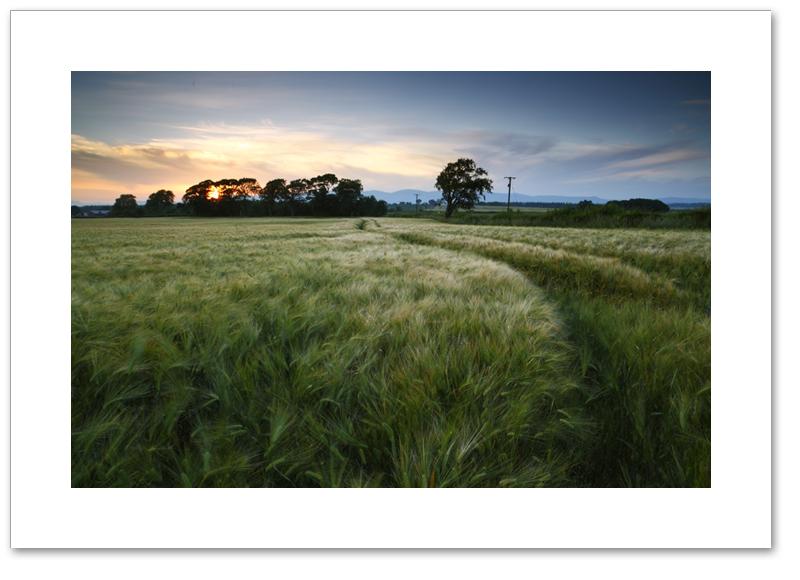 Ashes sunset, Culross, Fife