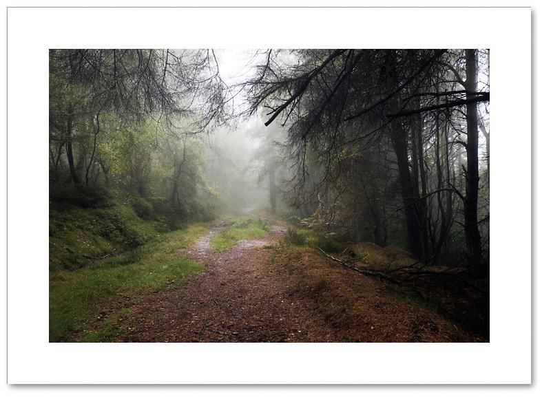 Mysterious Ways, Thrunton Wood, Northumberland