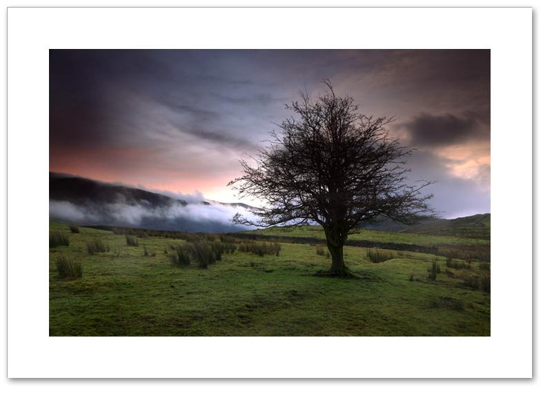 Tree of Tewet, Tewet Tarn, Lake District National Park