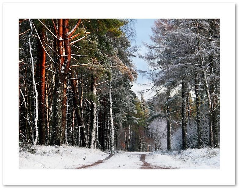 White Stripes, Devilla Forest, Fife