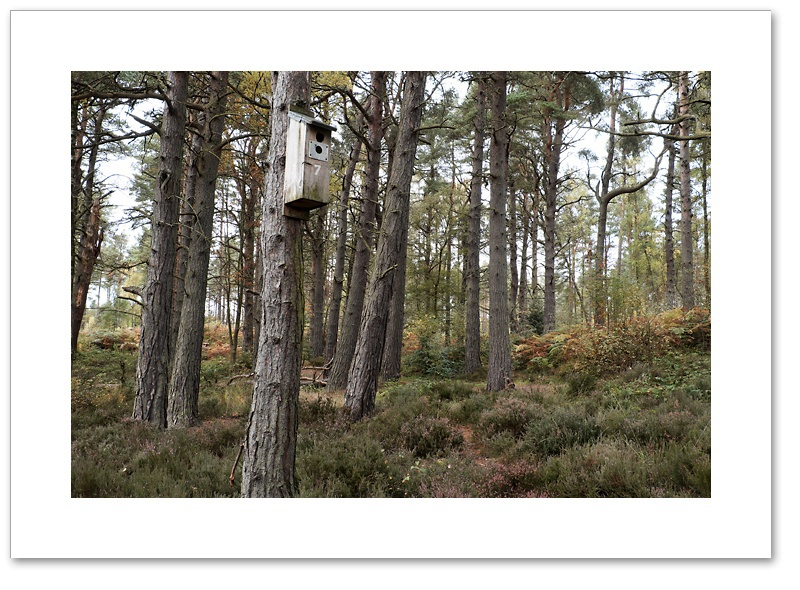 No.7, Devilla Forest, Fife