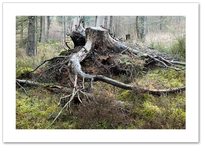 Exposed, Devilla Forest, Fife