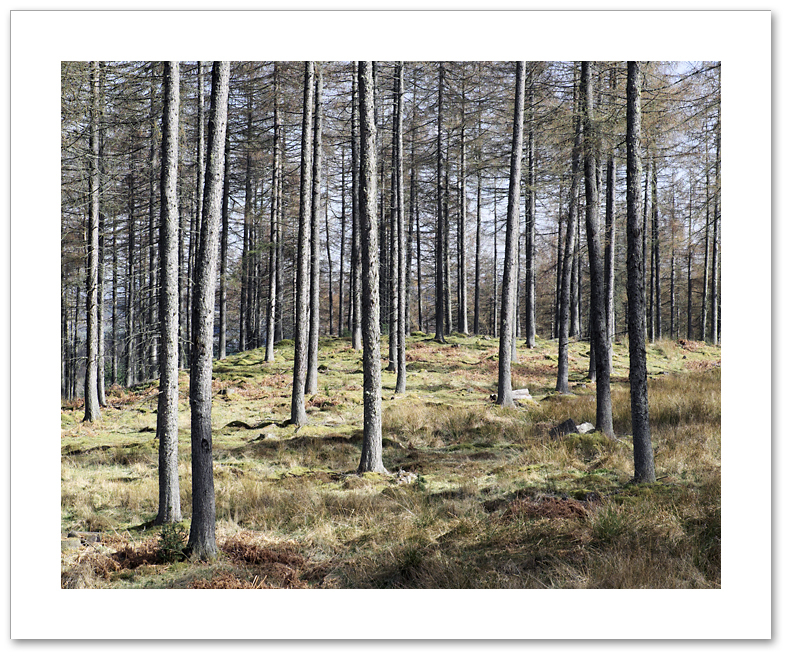 Poles Apart, Atholl Woods, Dunkeld, Perthshire