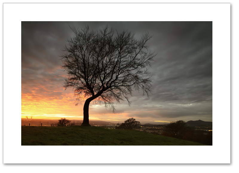 Tree of the Kings, Kings Seat Hill, Clackmannan, Clackmannanshire