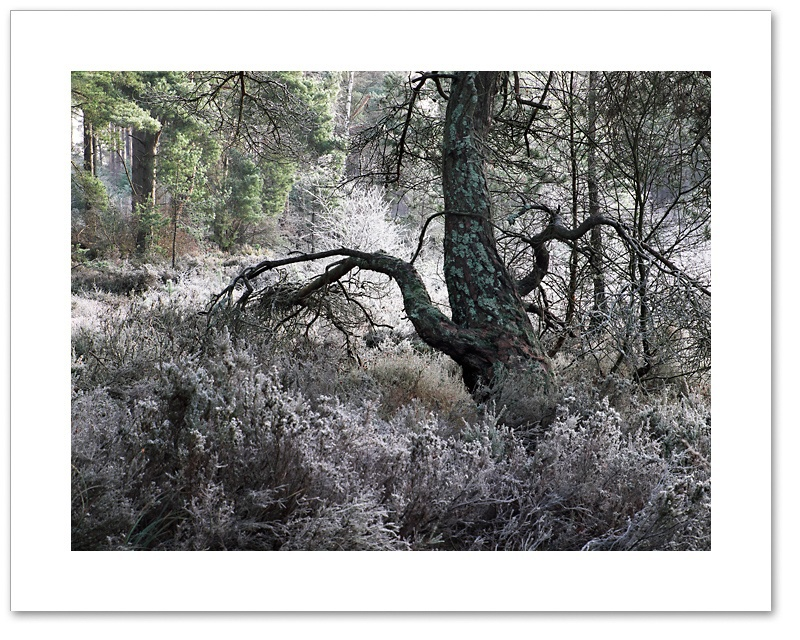 Monster, Devilla Forest, Fife