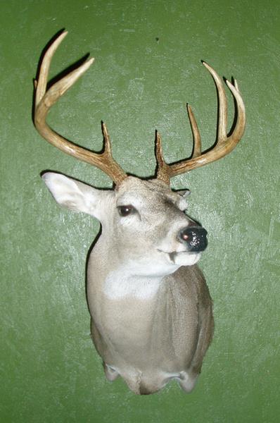 BECK - HEAD UP - Shoulder Mounts
