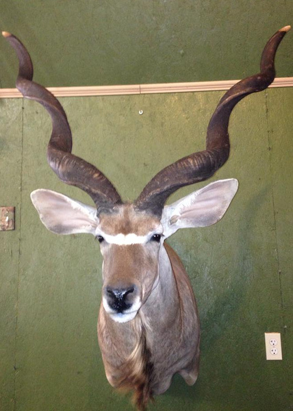 RENICK-KUDU - Exotic/ African Shld Mounts