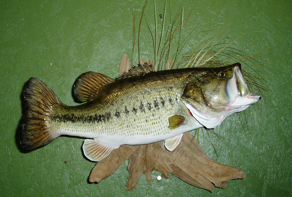 AMES - Fish
