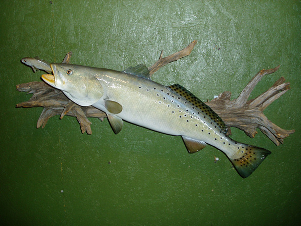 LEMASTERS 31' - Fish