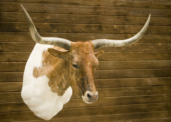 Longhorn - Shoulder Mounts