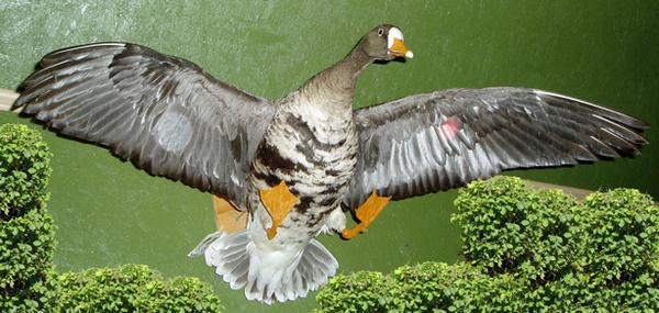 LIZ - Birds
