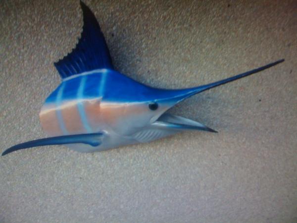 - Fish
