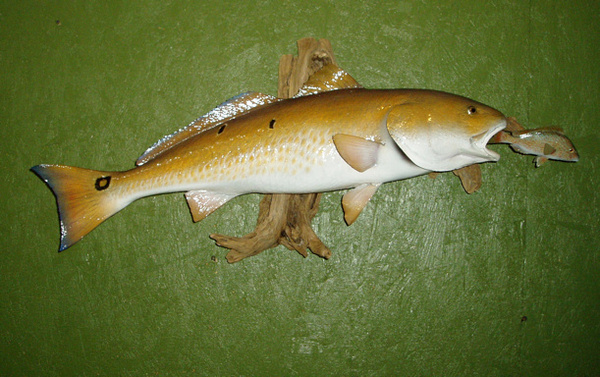 GARZA - Fish