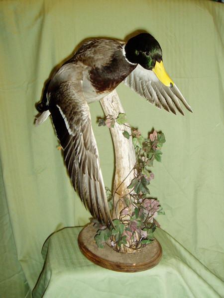 D. VILLARREAL - Birds