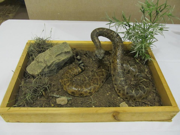 FOR SALE - Snakes