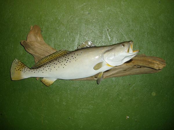 CRUMPLER 33' - Fish
