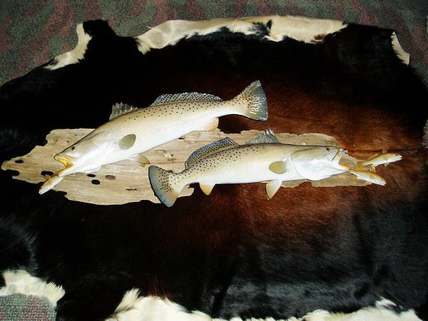 291/2 & 28 TROUT - SINSKI - Fish