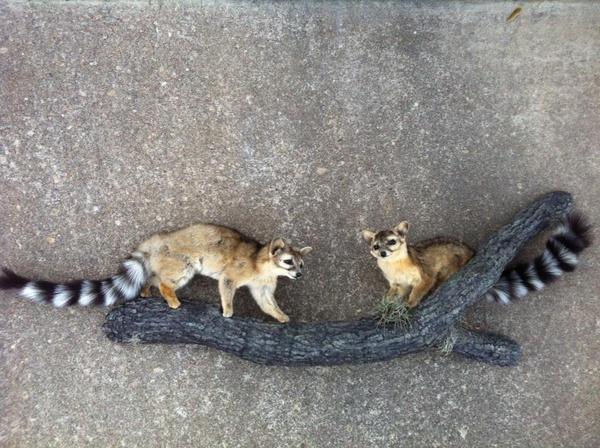 HERNANDEZ - Small Animals