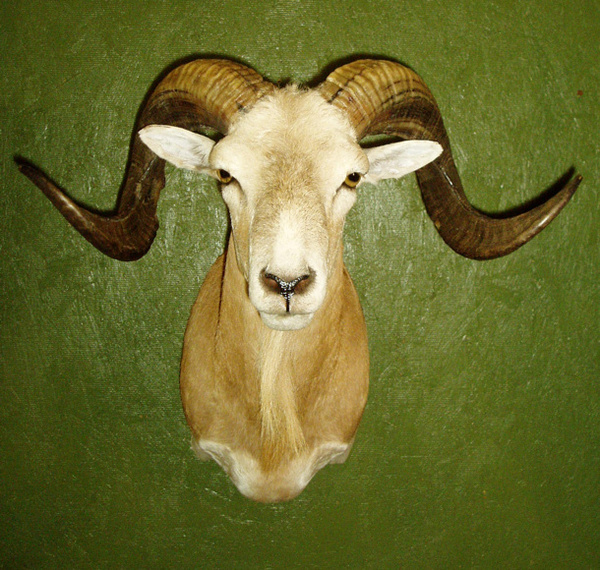 BURKETT - Sheep/Antelope