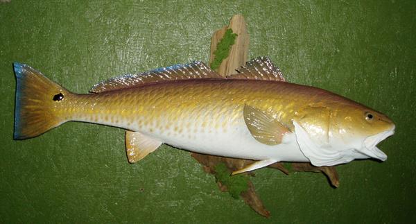 NALL 30' - Fish