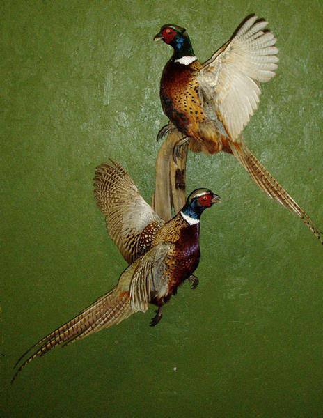 SUMILE - Birds