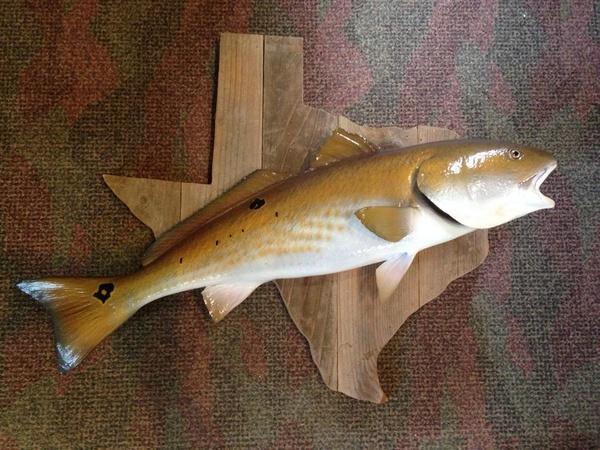 SALINAS - Fish