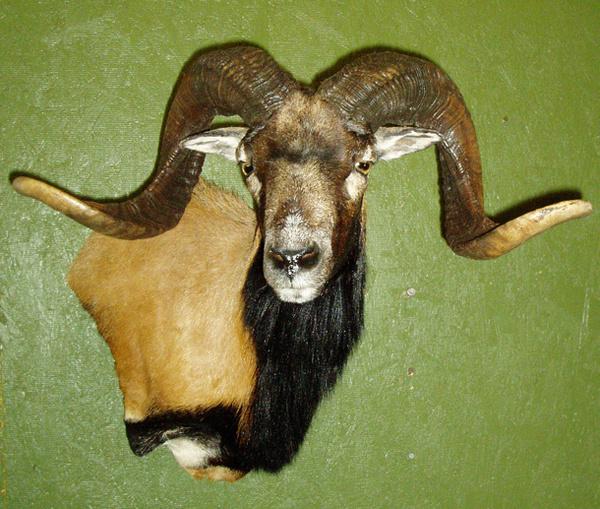 TATE-CORSICAN PEDESTAL - Sheep/Antelope