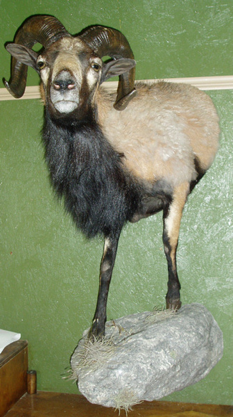 BAKER - Lifesize & 1/2 Lifesize Large Animals