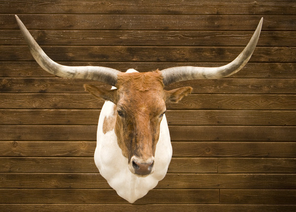 Longhorn - Joe Reeves - Shoulder Mounts