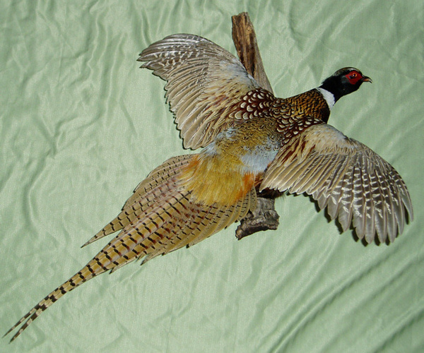 NAEGELIN - Birds