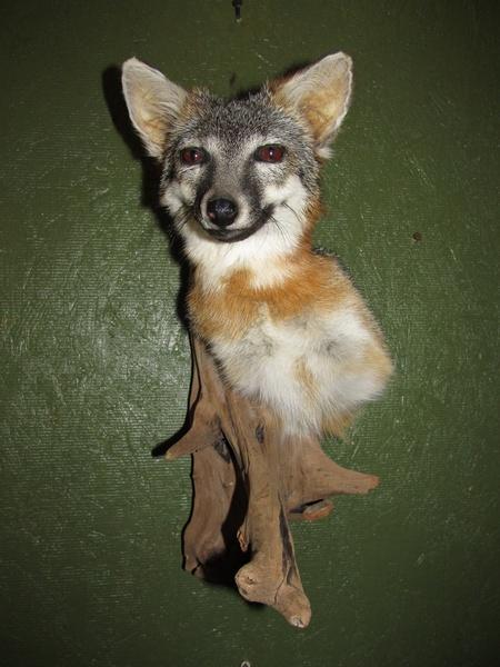 FOX SHLD - Small Animals