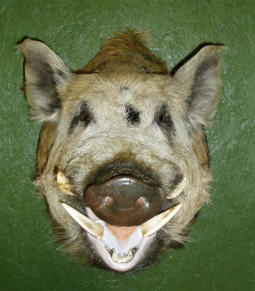 BRADBURY - Hogs and Javelina